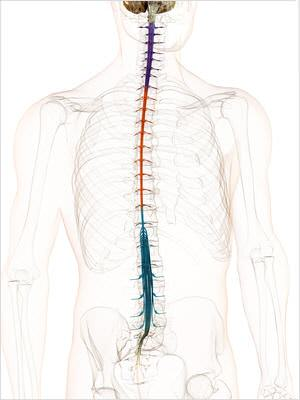 Rücken und Schmerzen